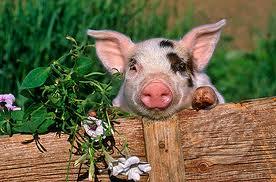 images pig flower