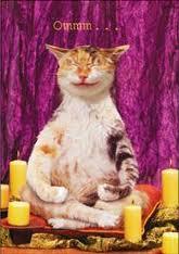 cat ommm