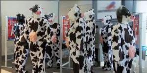 cows line